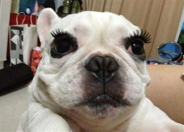 perro-con-rimel